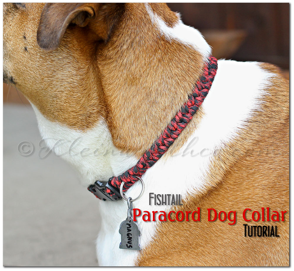 Fishtail paracord dog collar kleinworth co fishtail paracord dog collar jeuxipadfo Gallery