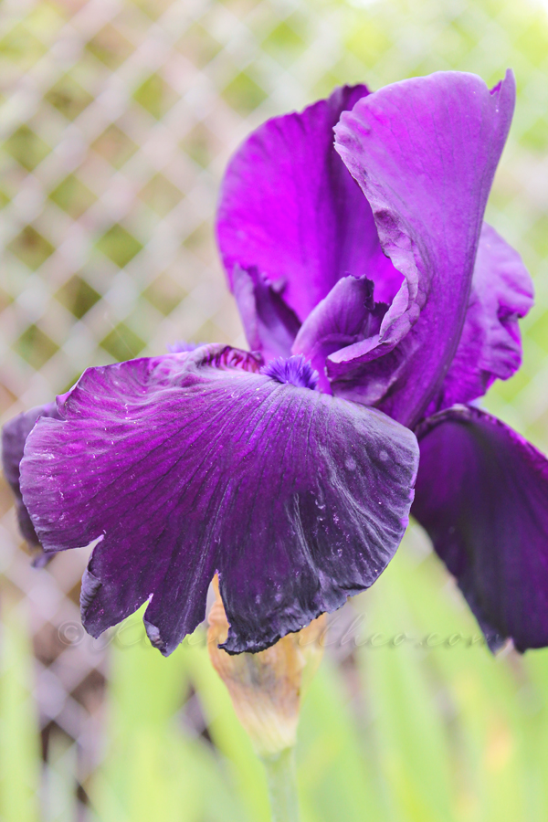 Spring Garden Inspiration