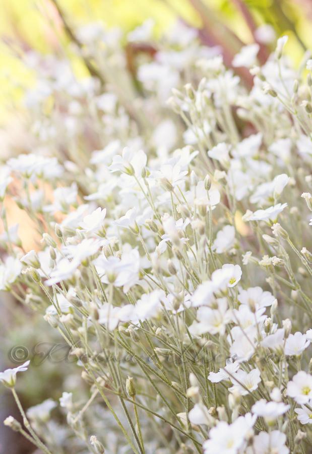 Midnight Texture Set www.kleinworthco.com