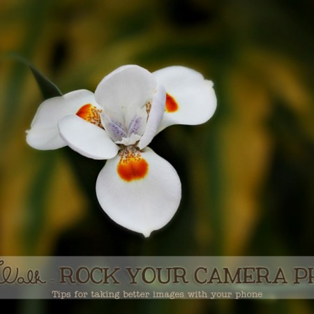 Photo Walk ~ Rock Your Camera Phone