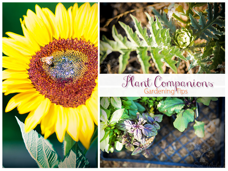 Plant Companions