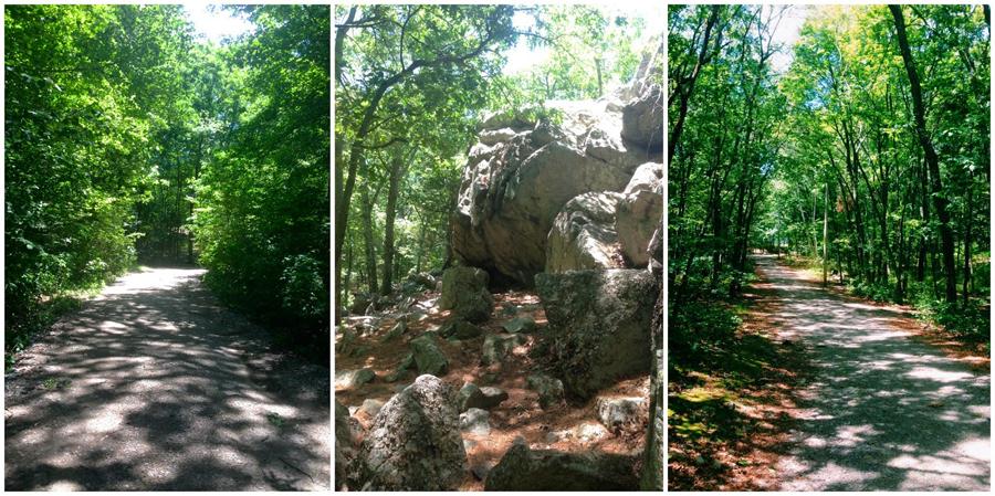 Camera Phone Tips – Urban Jungle vs. Green Jungle