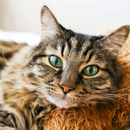 Caring for Cats : How to Spoil a Cat