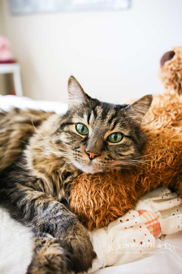 Sleepy cat - Caring for Cats : How to Spoil a Cat