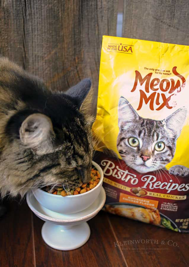 Hungry- Caring for Cats : How to Spoil a Cat