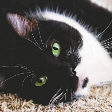 Best Tips for Healthier Cats