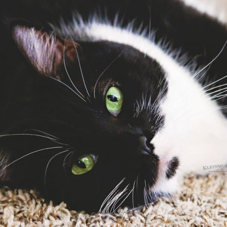 Best Tips for Healthier Cats + GIVEAWAY