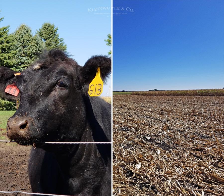 8 Awesome Corn Recipes & Iowa Corn Quest - Corn Farmers